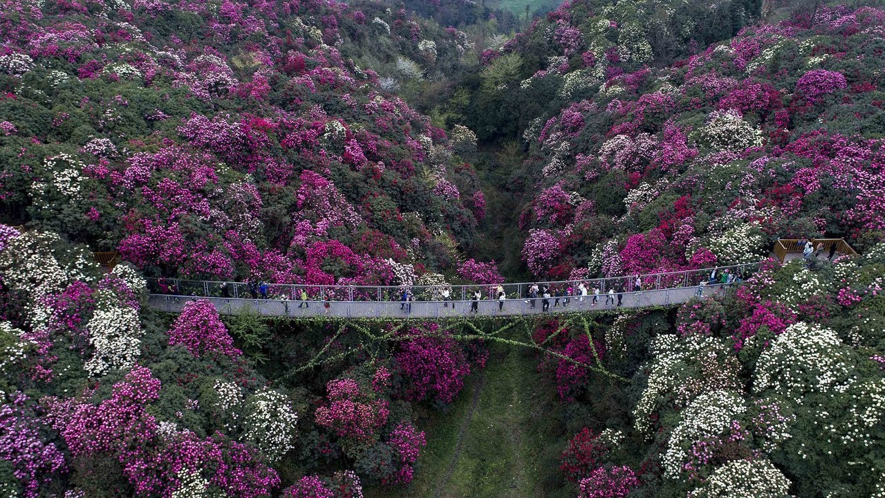 Spring Scenes Add Colorful Charm To Guizhou Youtube