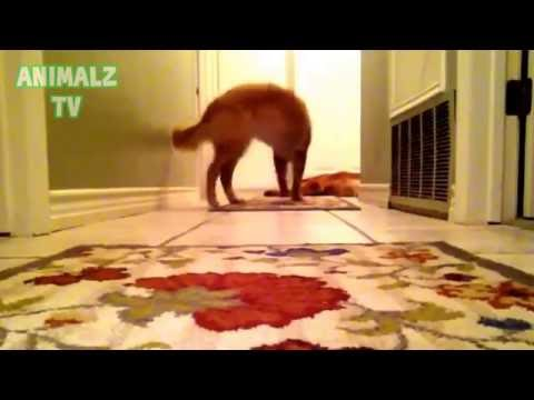 Funny Dogs and Cats Scared of Farts   Funny Pets Compilation 2015