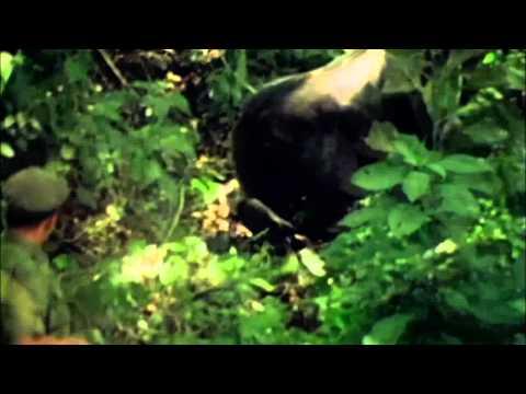 Thug Life - King Kong Thuggery