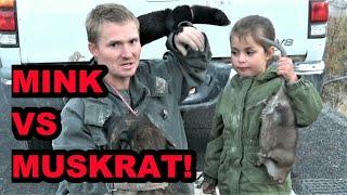 Muskrat vs Mink Madness!