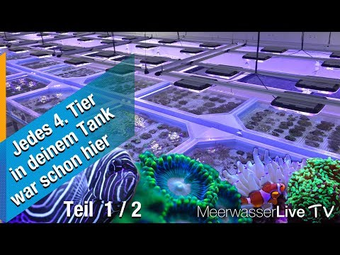 1/2 XXL - Europe's BIGGEST Marine Fish Supplier At TMC Tropical Marine Centre London UK (German)