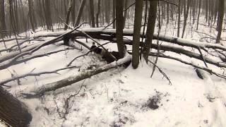 охота на кабана в приморском крае(лицензионная охота в приморском крае., 2013-01-08T20:29:07.000Z)
