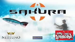 LIGHT ROCK FISHING con atrezature SAKURA con piccola cattura