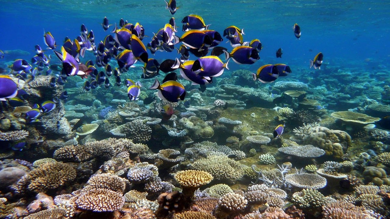 Tropical Ocean 3d Live Wallpaper Wielka Rafa Koralowa Seria Imax Cały Film Youtube