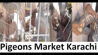 Kabootar Market Guru Mandir Karachi Pakistan