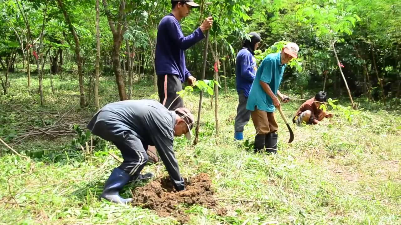 "national greening program a program for Executive order 26 describes the ngp as a program seeking to ""plant some 15 billion trees covering about 15 hectares for a period of six (6) years from 2011 to 2016, in lands of the public."