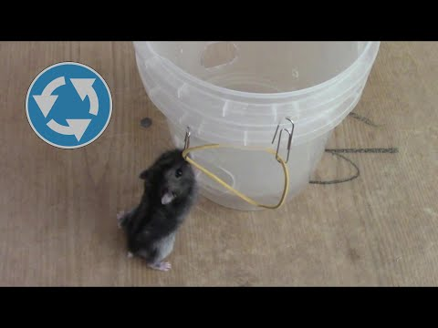 Вопрос: Дуется, как мышь на крупу . А как мыши дуются на крупу?