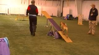 Darin And Chinese Shar-pei Really Running Akc Master Standard Agility, January 19, 2014