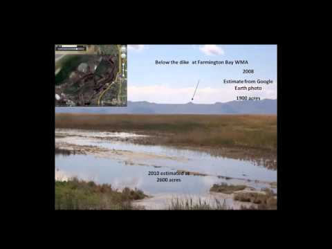 GLPC - Phragmites Management at Multiple Scales: Treatment Comparisons on the Great Salt Lake