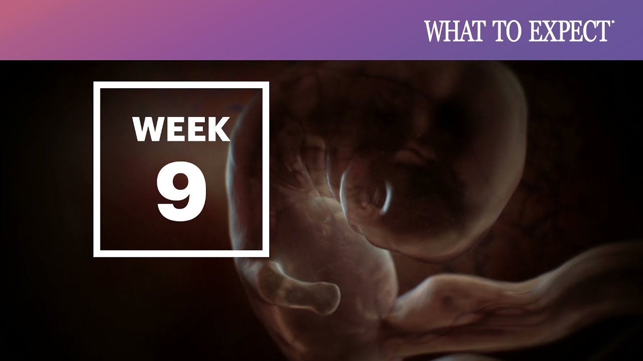 9 Weeks Pregnant What To Expect Your 9th Week Of Pregnancy Youtube