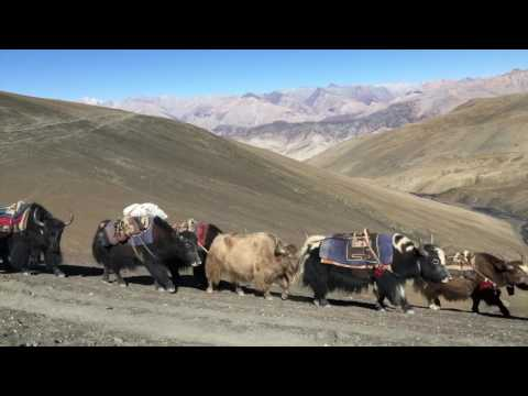 Beyond the Mountains - Trekking in Dolpo
