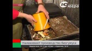 В Югре налаживают производство биогумуса  (Вермикультивирование)(Цветы, которые раньше совсем не распускались, не цвели, буквально за два месяца использования этого удобрен..., 2015-11-14T22:01:39.000Z)