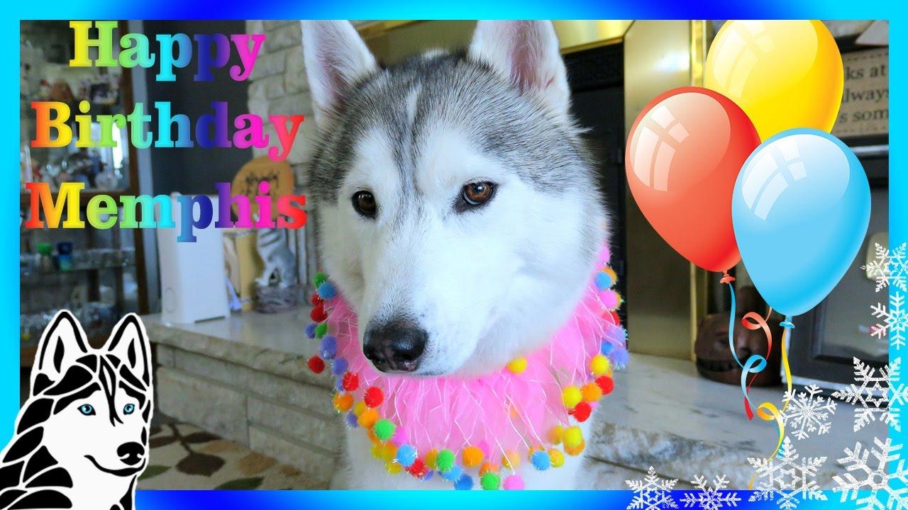 Dog Birthday Cake Memphis