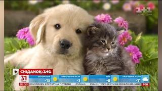 Японські вчені довели, що коти не дурніші за собак