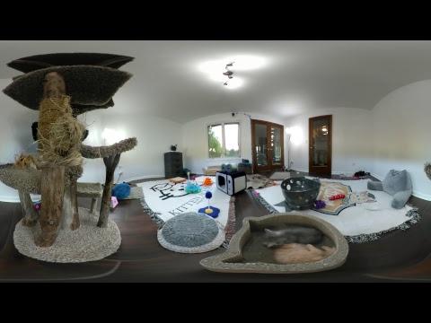 Kitten VR 360 Live Stream!