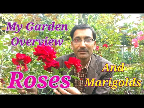 How  Roses and Marigolds Bloomed in my Garden !  You would Love to Watch it.