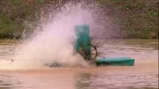 Falta de Oxigenação no Tanque De Peixes