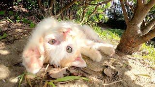 【猫の子育て】食事中の兄弟にじゃれつく元気な三毛子猫