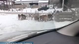 Очередное видео из рубрики