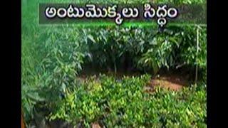 Sangareddy fruit research station supplying grafted saplings  - జైకిసాన్ - on 29th July 2015 thumbnail