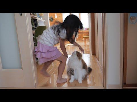 娘達だけでお泊りした翌日、じっと玄関で待っていた猫に飛びつくと…