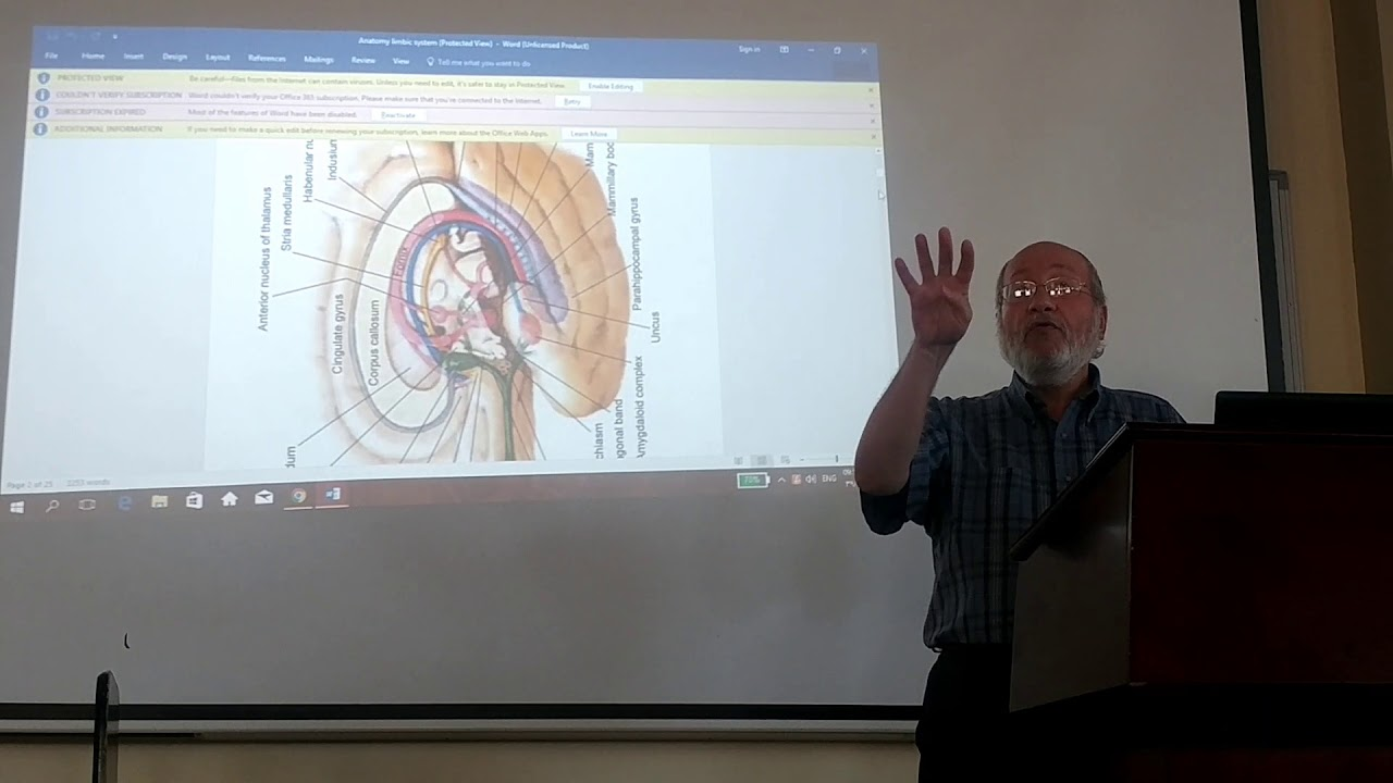 anatomy of septum pellucidum and hippocampal formation by Dr.Wahdan ...