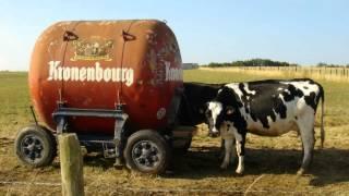 Les Vaches Laitières: Le p'tit matin bourré