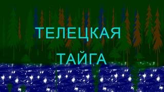 Тайга Телецкого озера //видео обзор(Планируете отпуск на #Телецком, тогда вы можете посмотреть #видеообзор про тайгу,настоящую алтайскую, наде..., 2017-02-18T17:00:00.000Z)