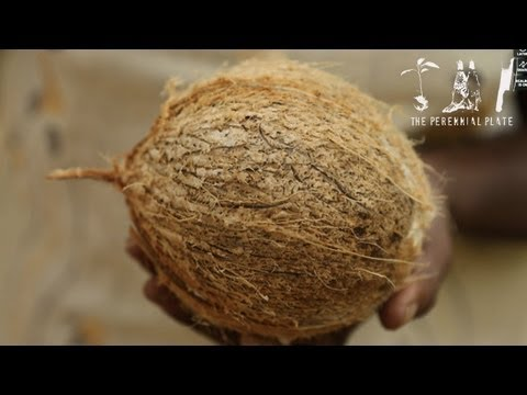 Coconut : Nose to Tail | The Perennial Plate's Real Food World Tour