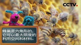 [智慧树]道哥和摩尔:蜜蜂|CCTV少儿