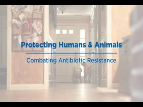 Protecting Humans & Animals: Combating Antibiotic Resistance