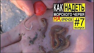 Как одевать морского червя на крючок для ловли пеленгаса. Выпуск #7