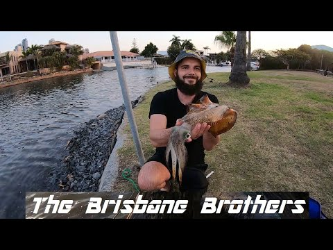 THE CRAZIEST AFTER WORK LAND BASED FISHING SESSION NUMBER 2 GOLD COAST