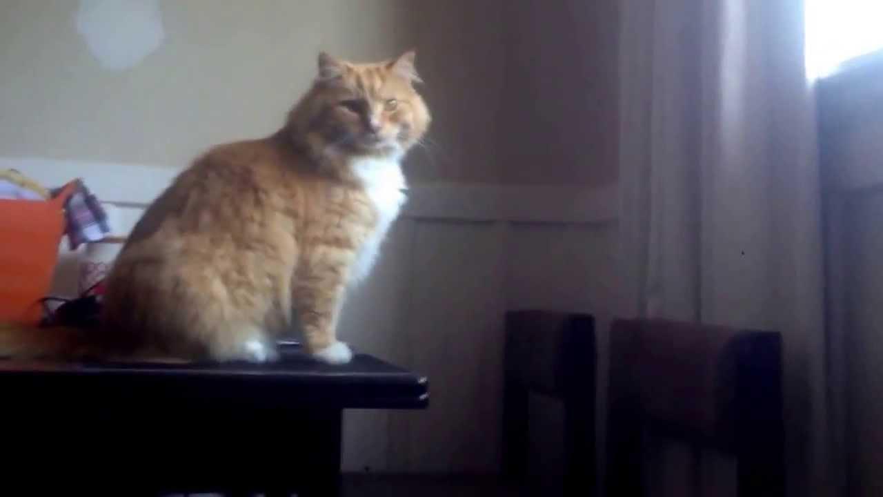 Skimbles Epic Cat Fail Youtube