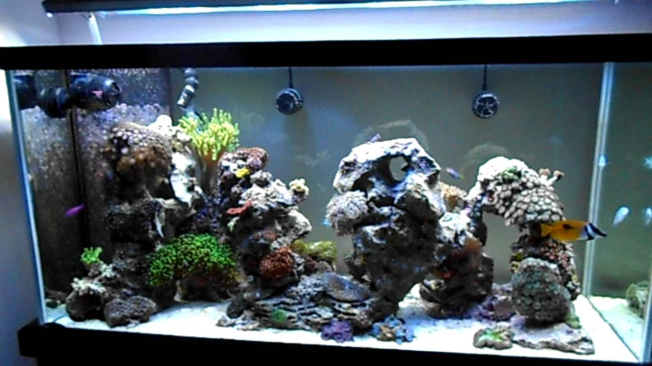 Aquascaping in my 90g Reef - YouTube