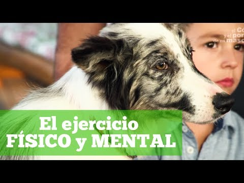 DOGS: The importance of physical and mental exercise of Border Collies.