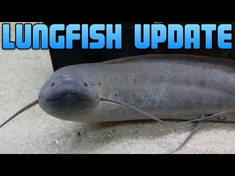 Lungfish 5 Month Update
