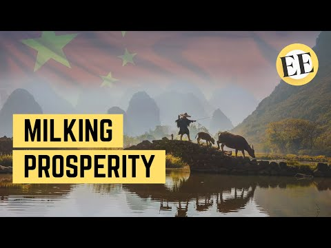 How China is Fighting Poverty With... Cows?