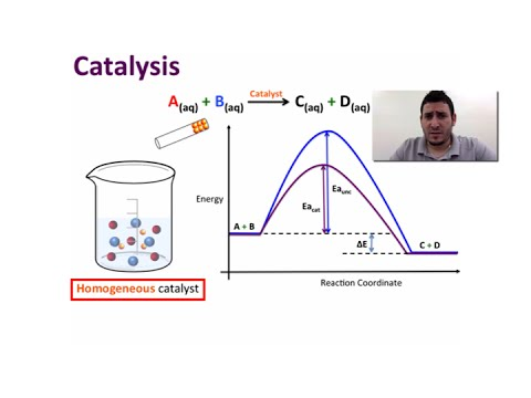 Chemical Kinetics | A Model for Chemical Kinetics & Catalysis.