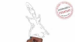 Как нарисовать белку летягу(Как нарисовать картинку поэтапно карандашом за короткий промежуток времени. Видео рассказывает о том,..., 2014-07-05T05:15:48.000Z)