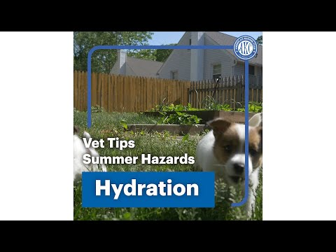 Vet Tips | Hydration - Summer Hazard
