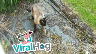 Rabbit Escapes Cat, Gets Eaten by Owl || ViralHog