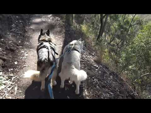 Husky & Malamute visit mums and go for a hike