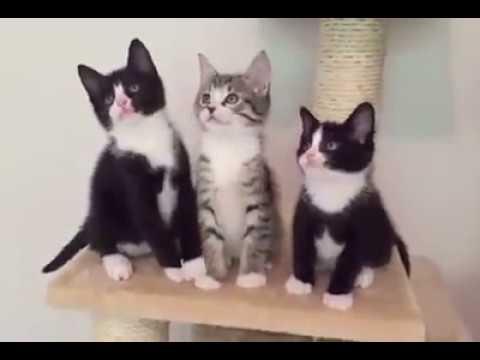 Irmãos Sapecas - Mundo dos Gatos