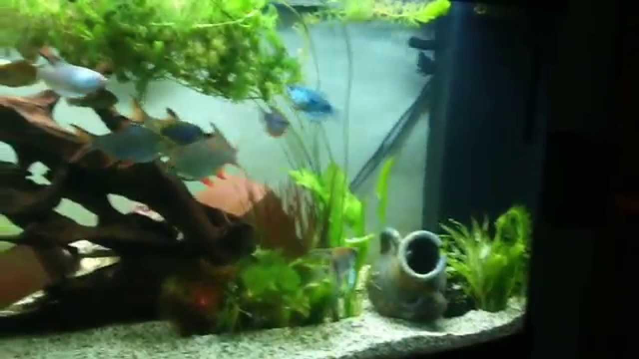 aquarium 450 liter youtube. Black Bedroom Furniture Sets. Home Design Ideas