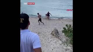 Kolombiya Da Sahilde çalıların Arasından çıkan Timsah Paniğe Yol Açtı