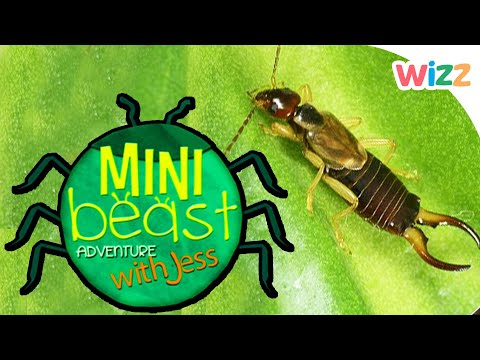 Children Learn About The Earwig