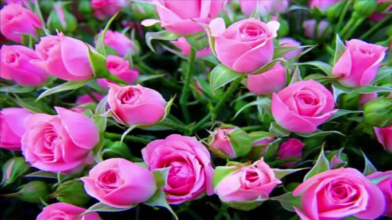 15 Most Beautiful Flowers In The World Youtube