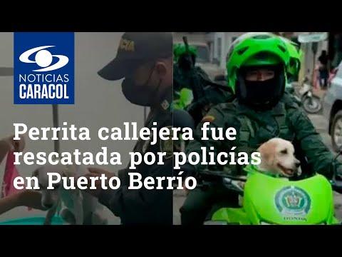 Perrita callejera fue rescatada por policías en Puerto Berrío y ahora patrulla con ellos las calles