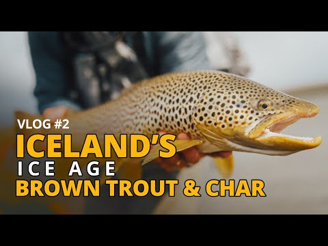 Vlog#2 - Iceland's Ice Age Brown Trout And Char